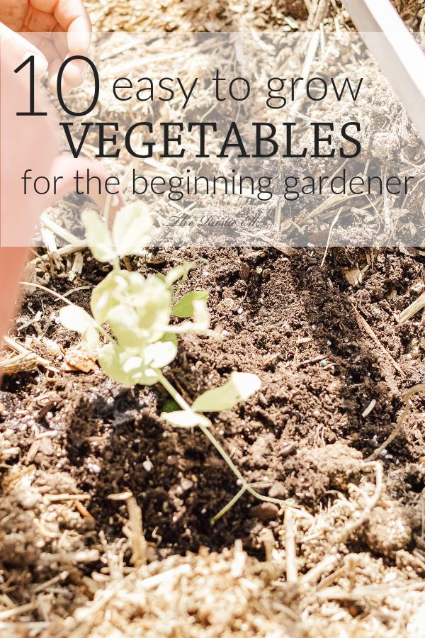 10 Easy To Grow Vegetables For The Beginning Gardener Growing