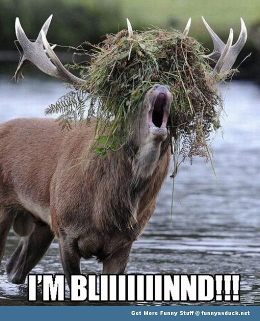Funny Hunting Captions - The Folded Soul