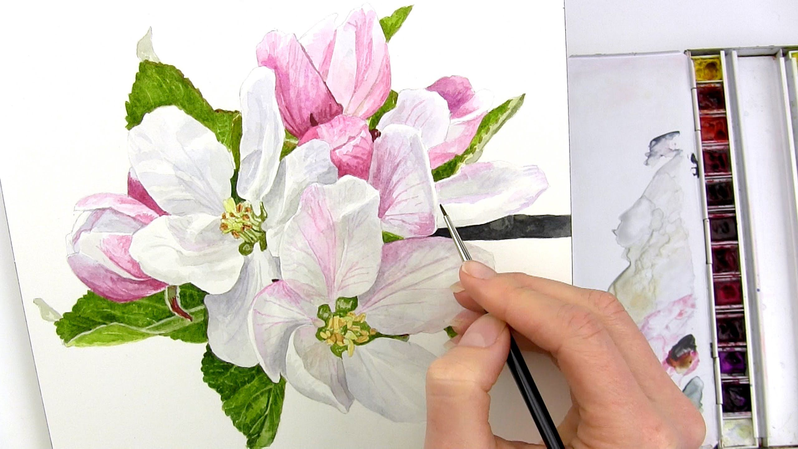 Watercolor painting watercolor flowers flower art flower - How To Paint Realistic Apple Blossom In Watercolour With Anna Mason