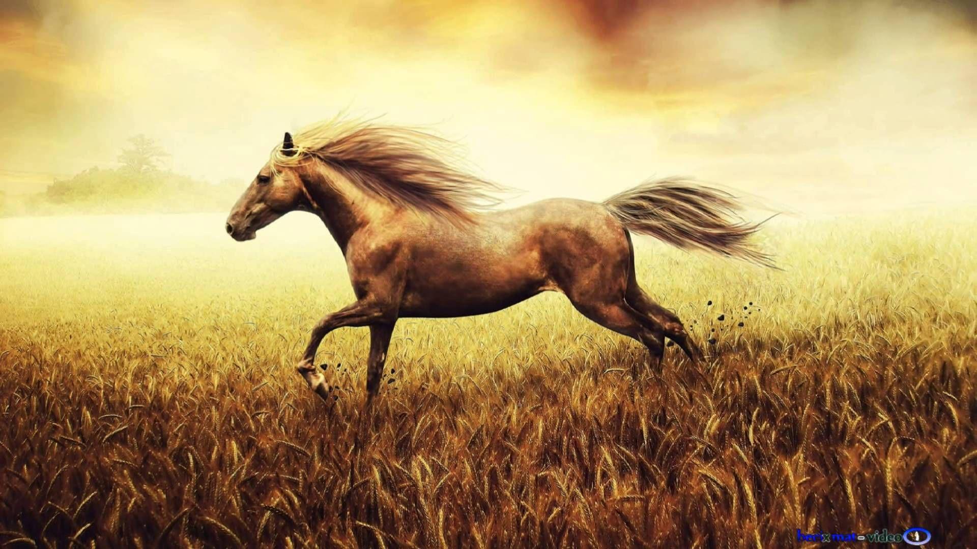 Must see Wallpaper Horse Spirit - 492beff723b8005a744093787ea20d5c  HD_879888.jpg