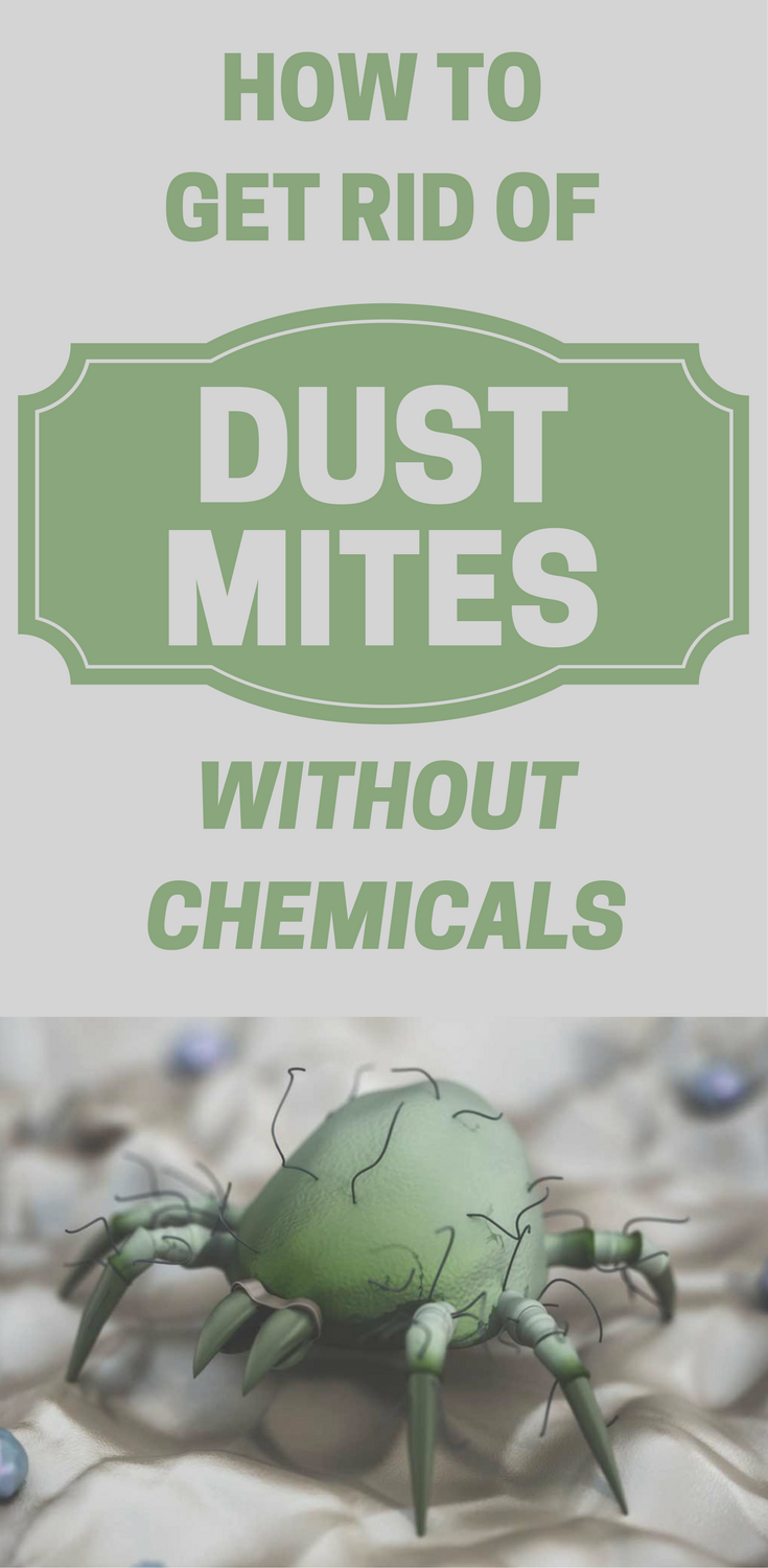 How To Get Rid Of Dust Mites Without Chemicals Dust