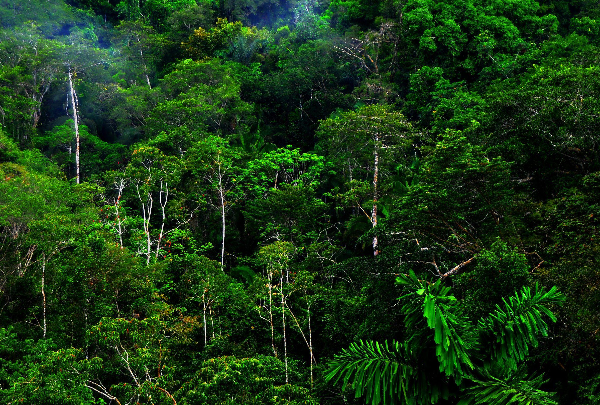 Bosque Húmedo Rainforest Plants Rainforest Pictures Rainforest Photography