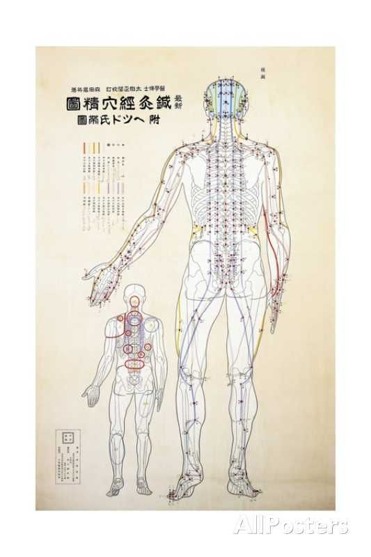 Focal Points of the Human Body, Back View, Watercolor Giclee Print at AllPosters.com