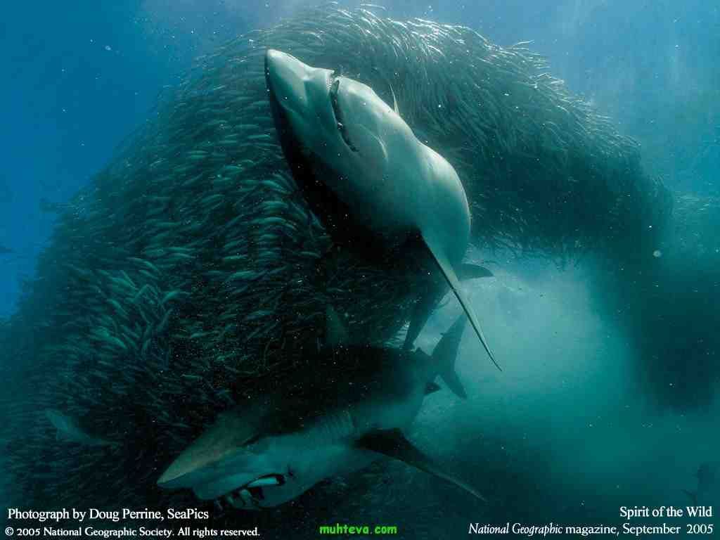 national geographic wallpaper best 100 Ocean animals