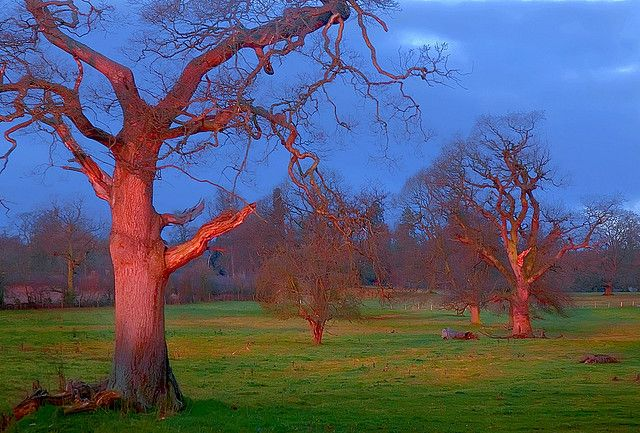 Old Orchard Dawn   Flickr - Photo Sharing!