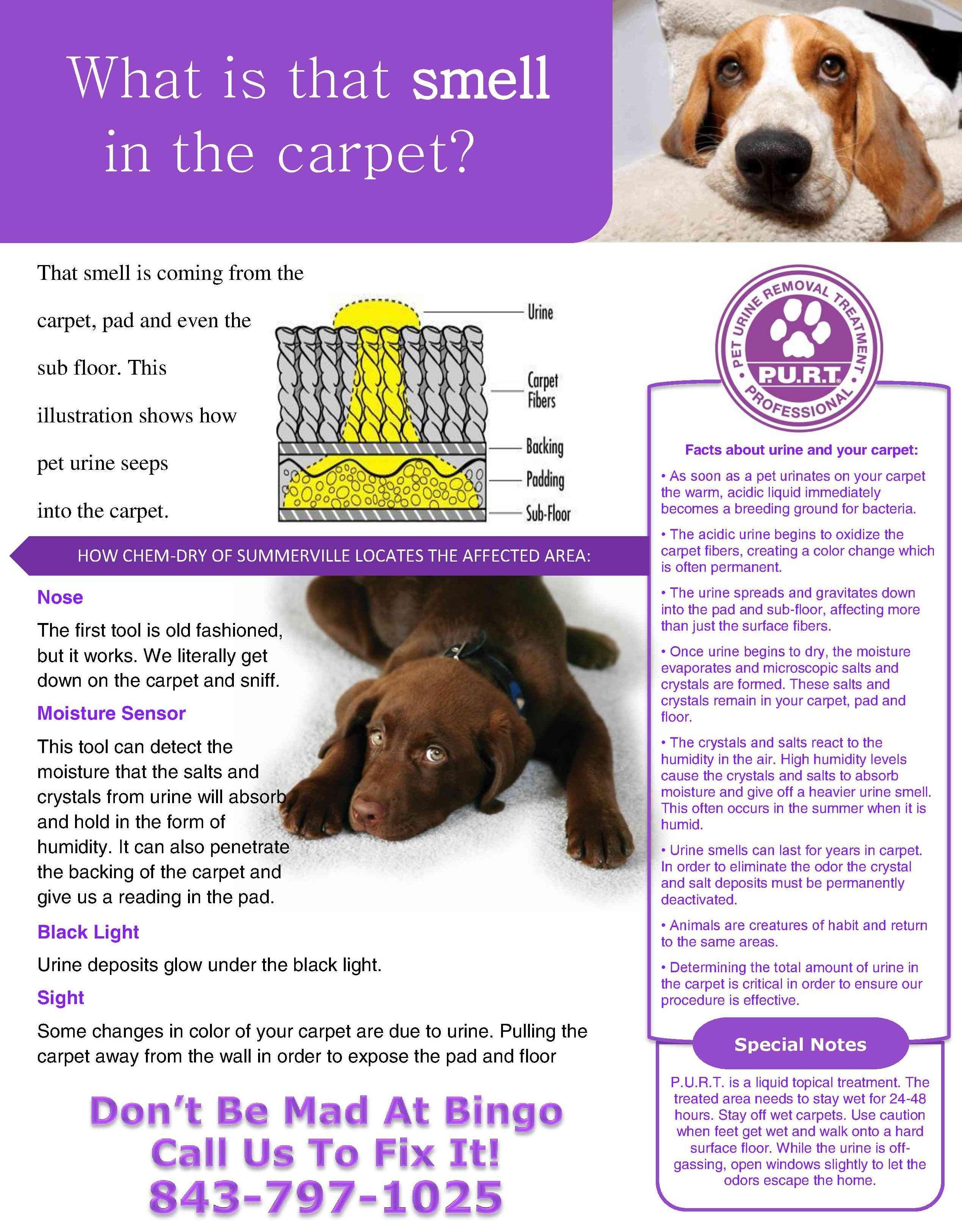 Pet Urine Carpeting Facts John S Chem Dry In Bellingham Wa