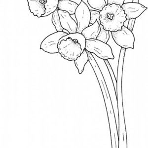 Pretty Daffodil Flower Coloring Page Kids Play Color With