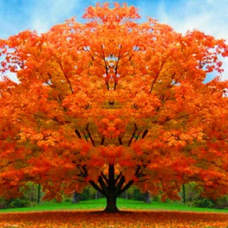 Beautiful Tree Pictures, Photos, and Images for Facebook
