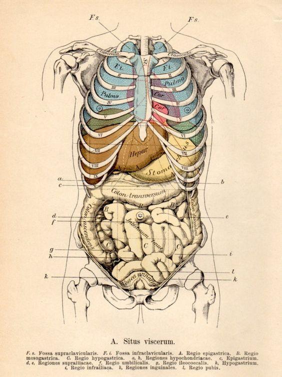 1901 anatomy antique print vintage lithograph situs viscerum 1901 anatomy antique print vintage lithograph situs viscerum human organs diagram abdomen human body heart lungs intestine stomach ccuart Images