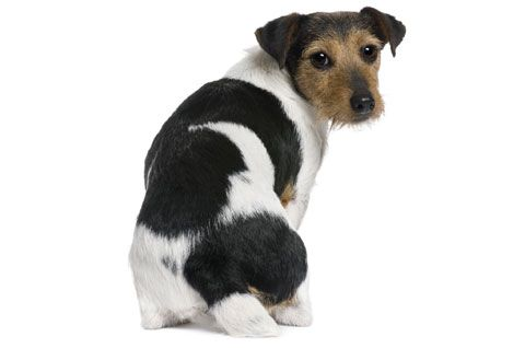14+ Can dogs have scoliosis ideas in 2021