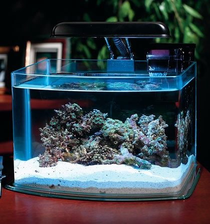3 5 Gallon Tank From Dr Foster Smith For Either Desk Or Counter Top With Images Aquarium Reef Aquarium Saltwater Aquarium