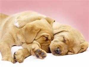 Cute Dog Picture - Yahoo Search Results Yahoo Image Search Results