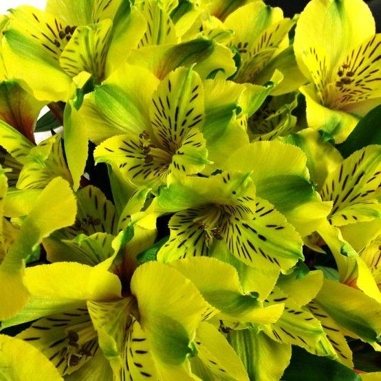 The Beauty Of Shakira Green Alstroemerias Flowers Garden Calla