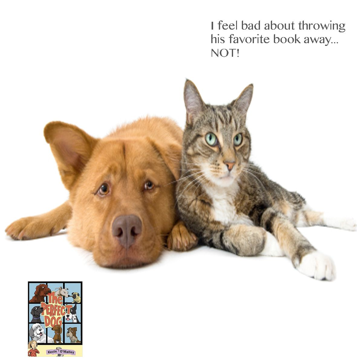 Pin By Booksbyomalley On Kevin O Malley Pets Pet Sitters Best Friends Pets