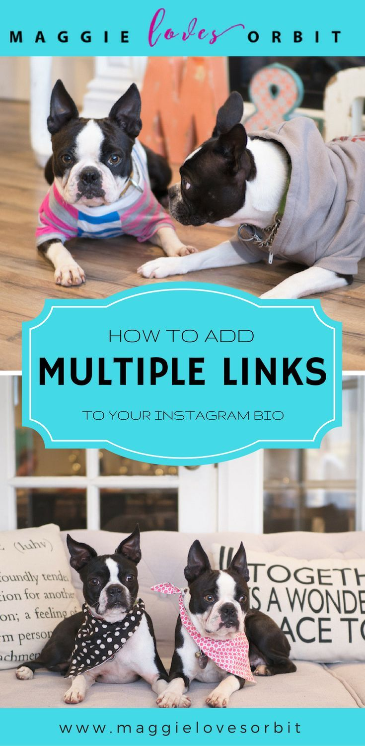 How to add multiple links through your instagram bio with