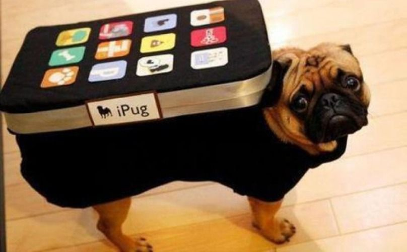 What Are The Best Apps For Dog Parents Pet Halloween Costumes