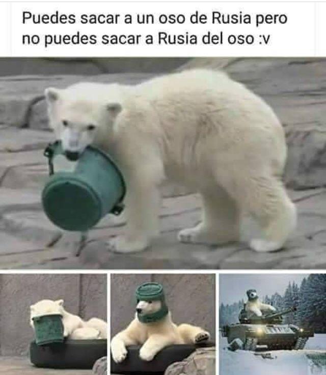 Viva Los Osos Rusos Memes Funny Memes Memes Y Quality Memes