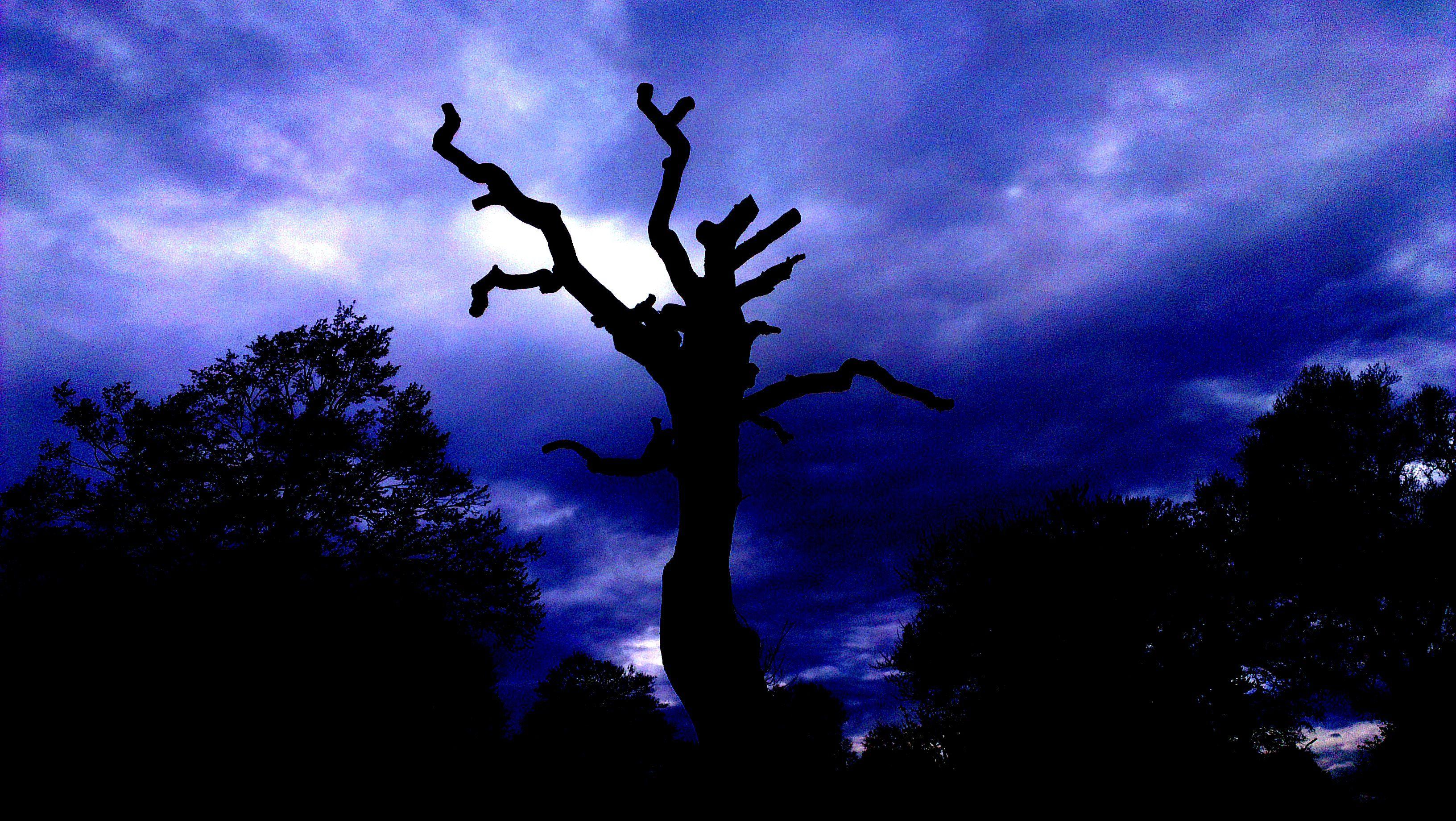 Dark Romance gibt es auch im Alltag: Baum im Jenischpark