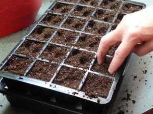 How To Grow Green Peppers From Seed Indoors: A Step-By ...