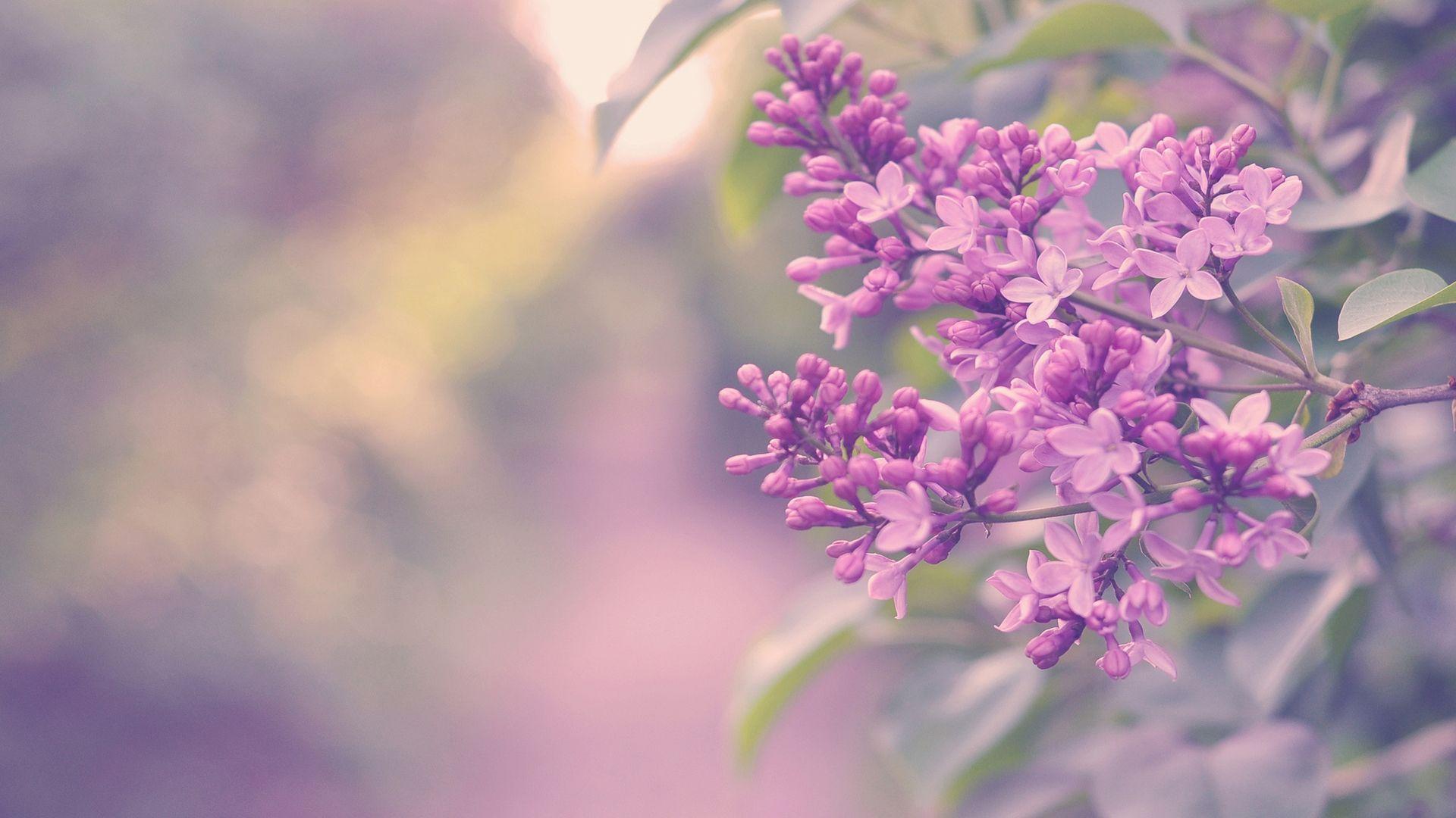 Purple Lilac Pink Flower White Pretty Colorful Arrangement Colors ...