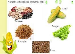 Semillas Comestibles Para Colorear Buscar Con Google Semillas Comestibles Semillas Porotos