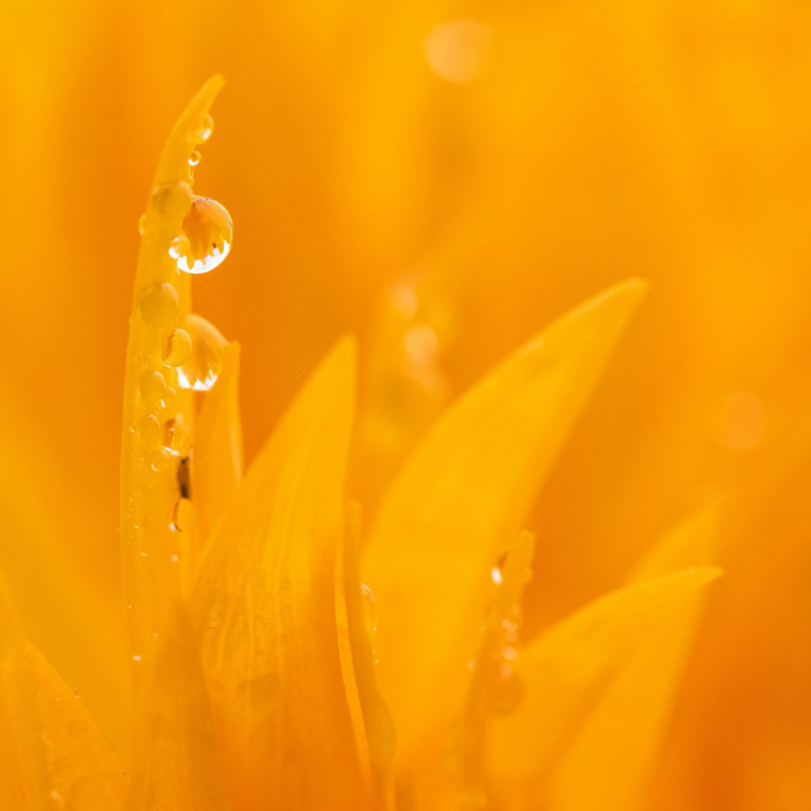 Photograph ☼ After the rain After the rain by Lucie Gagnon is 500px
