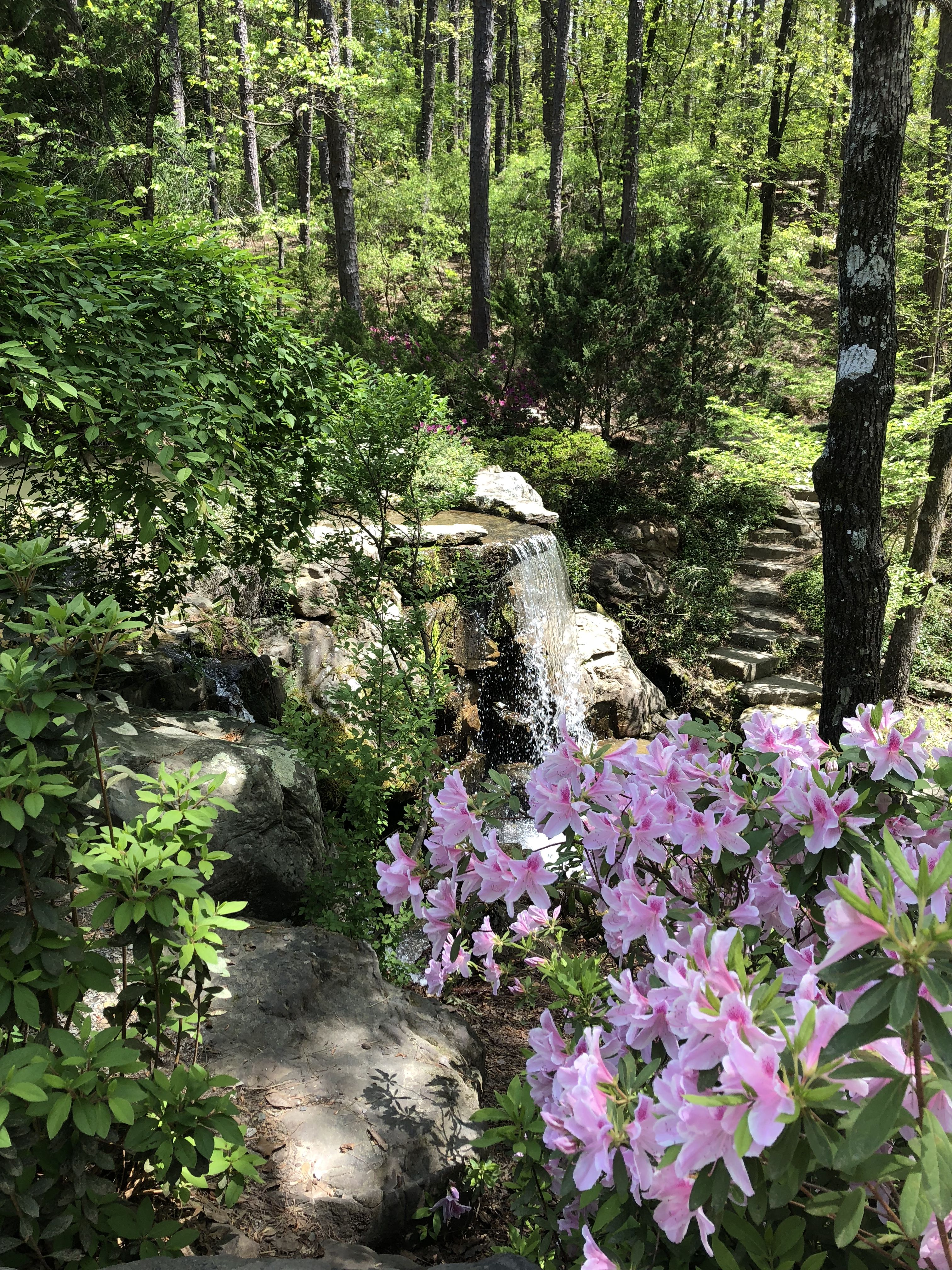 Garvan Woodland Gardens Hot Springs Arkansas Photo By Denise