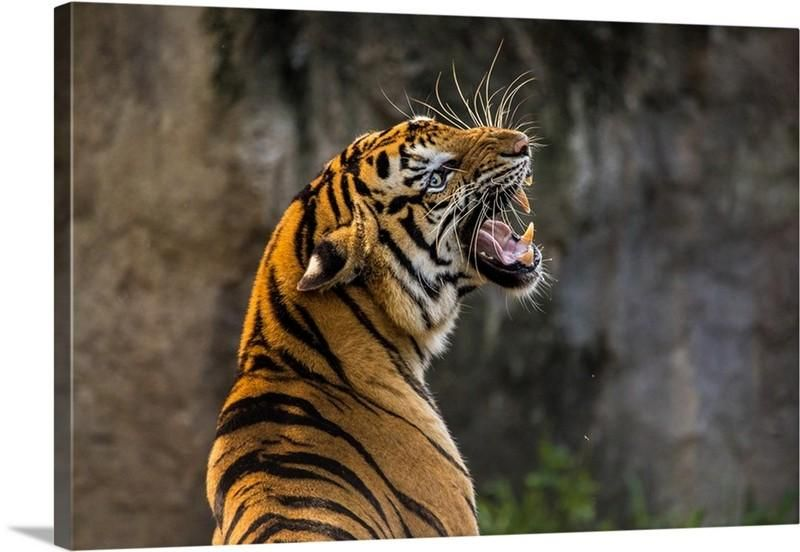 Roaring Tiger Canvas Wall Art Print (With images) Big