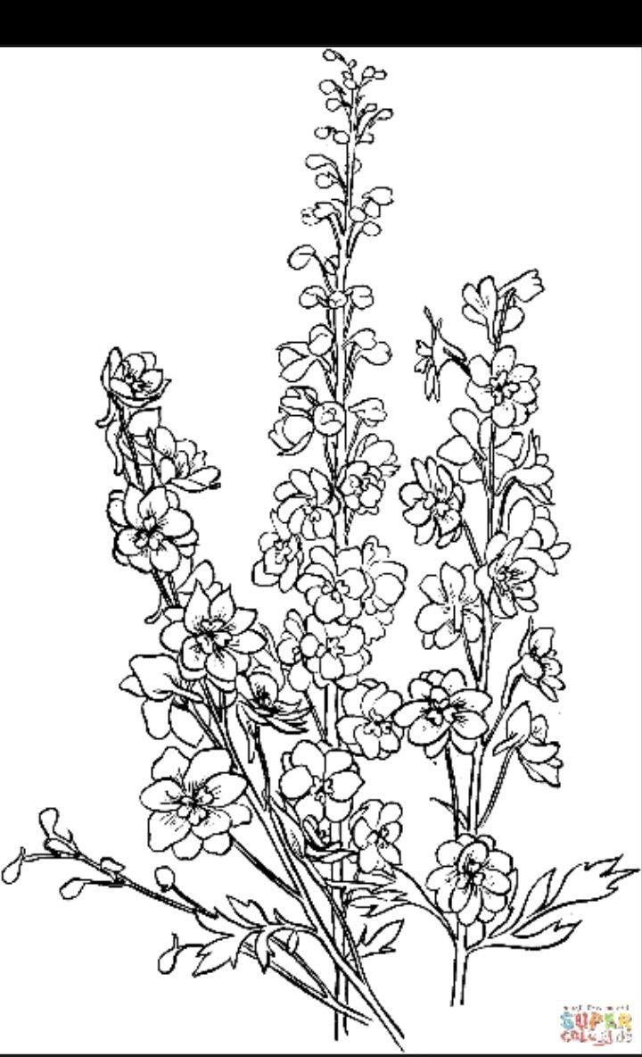 Larkspur Outline Delphinium Tattoo Larkspur Flower Tattoos