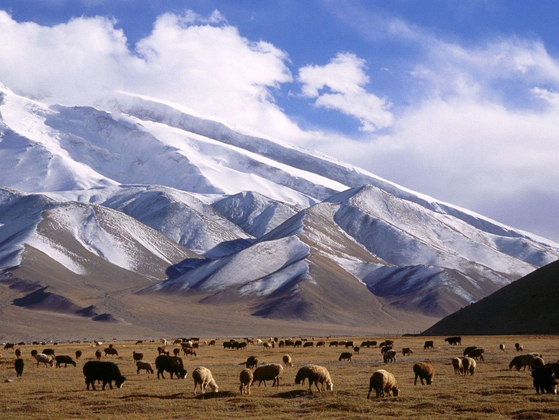Xinjiang Buscar Con Google