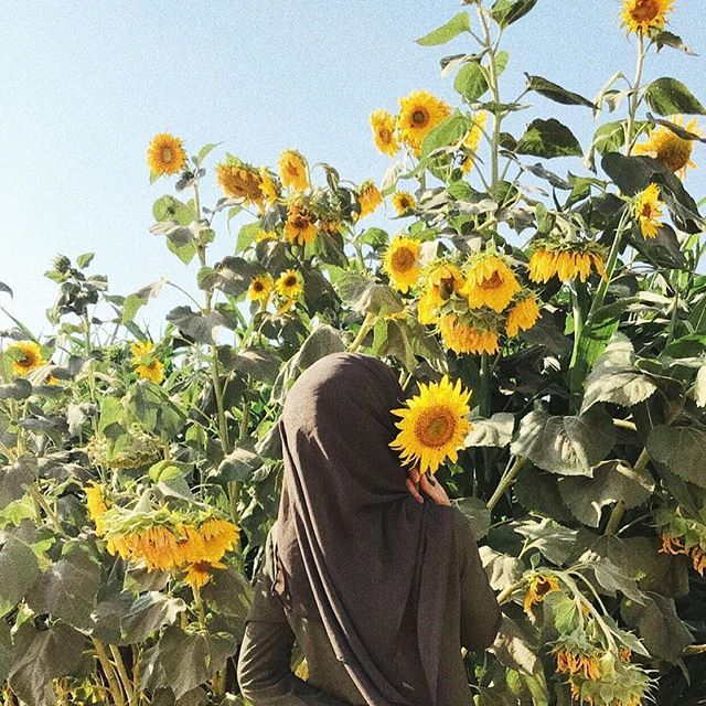 Sunflowers end up facing the sun but they go through a lot of dirt to find their way there. -J.R  Su...