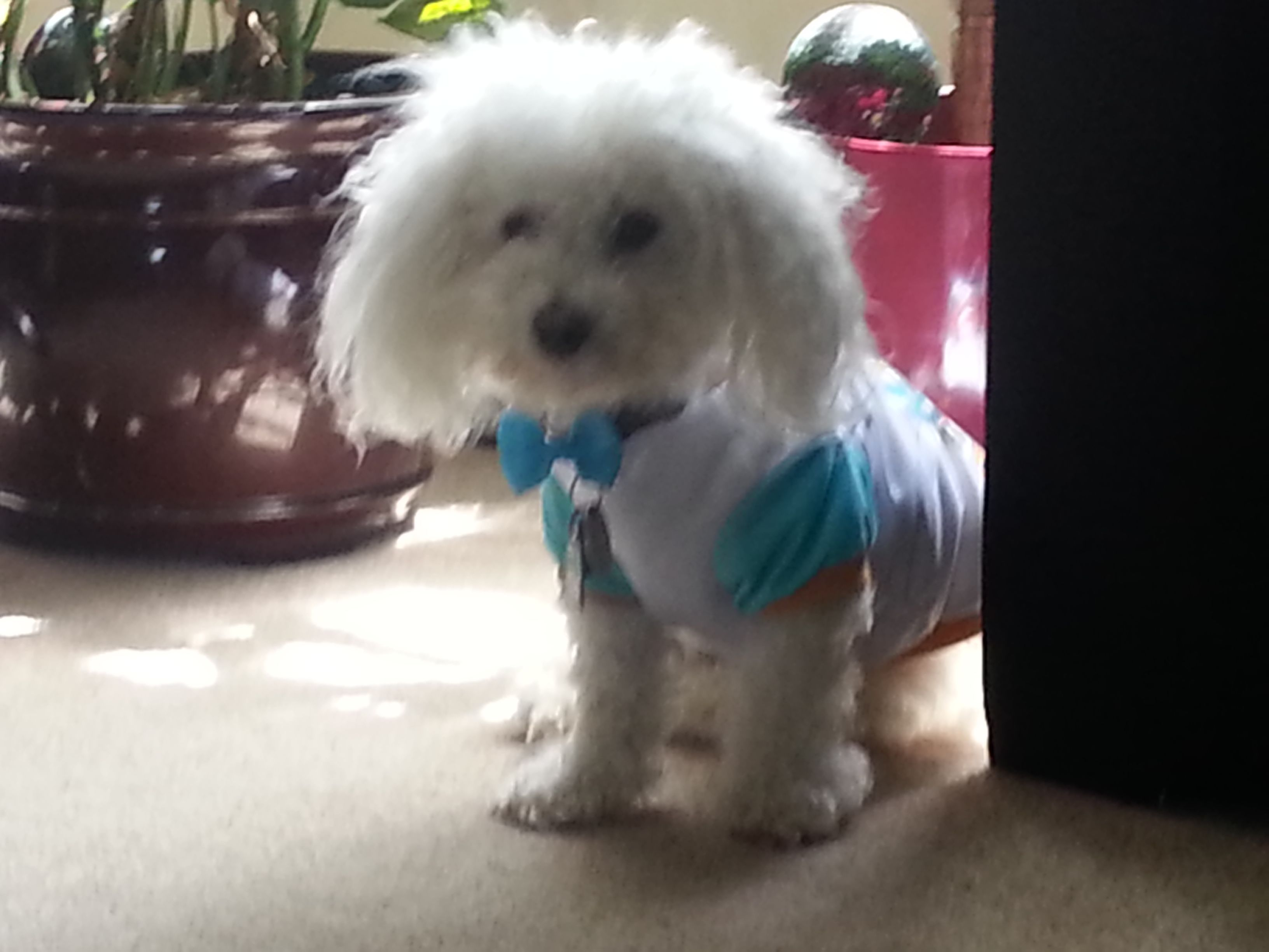 My Dog Fluffy