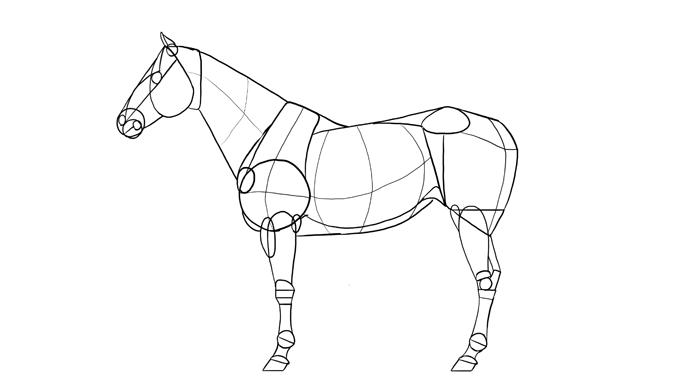 How To Draw Horses Step By Step With Monika Zagrobelna