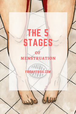 the 5 srages of menstruarion