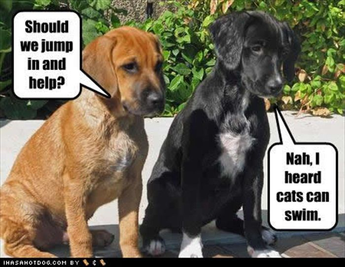 Hindi Jokes Funny Cat Dog Pictures Dog Cat Pictures Dog