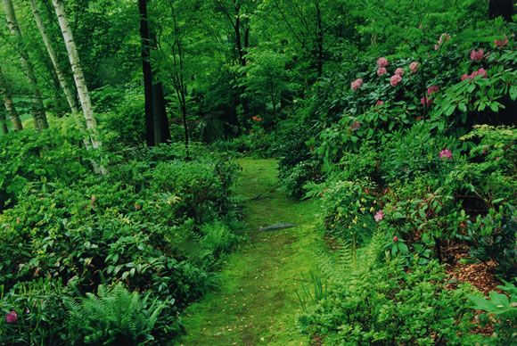 Woodland Garden Design woodland garden design Woodland Garden Layout The Beckoning Path Woodland Garden Photographs Of Theodore Nierenberg