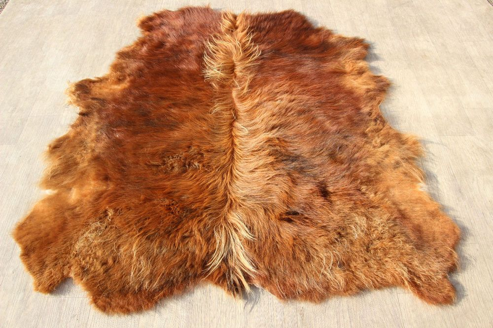 Cowhide Rug Scottish Highland Cattle Steer Young Bull Stunning And Rare
