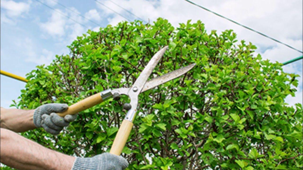 Tree Trimming Service near Omaha Nebraska Omaha Junk