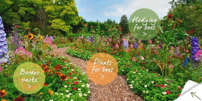 Amazing Bee Garden Plants For Pinterest