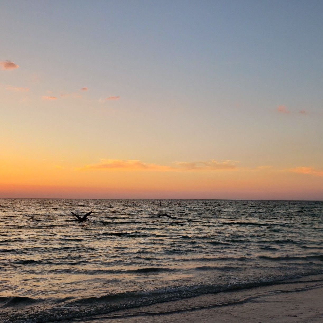 Indian Beach: Pelican Diving @ Sunset. Indian Rocks Beach, FL