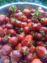 How to Dry Strawberries in a Dehydrator - Includes instructions on how to condition the afterwards.