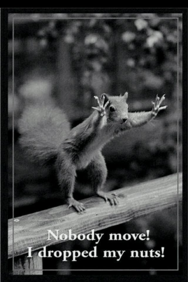 Funny Squirrel With Images Funny Animals Funny Animal Pictures Animal Captions