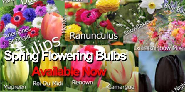 Spring flowering bulbs now availabe gardening ideas pinterest spring flowering bulbs now availabe mightylinksfo