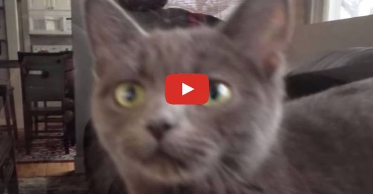 A pregnant cat invaded a guys house and turns his life
