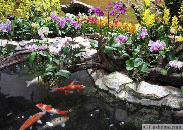 Orchids Garden Design atlanta botanical garden hanging orchid display Backyard Landscaping With Orchids Beautiful Flowers