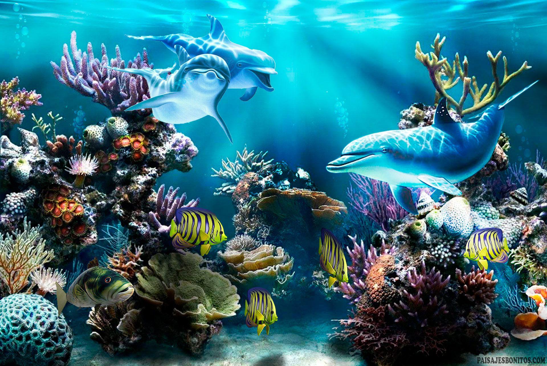 Dibujos Animados Animales Lindo Mar Fondo De Pantalla De: Fondo Pantalla Delfines Bajo Mar