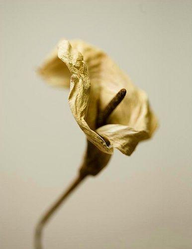 https://flic.kr/p/5GR7xd | Flores de Invierno 2 | La belleza y el paso del tiempo.