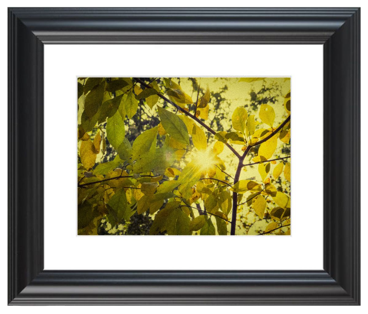 Pre-Holiday Sale! Beautiful Nature photography Prints, wall art ...