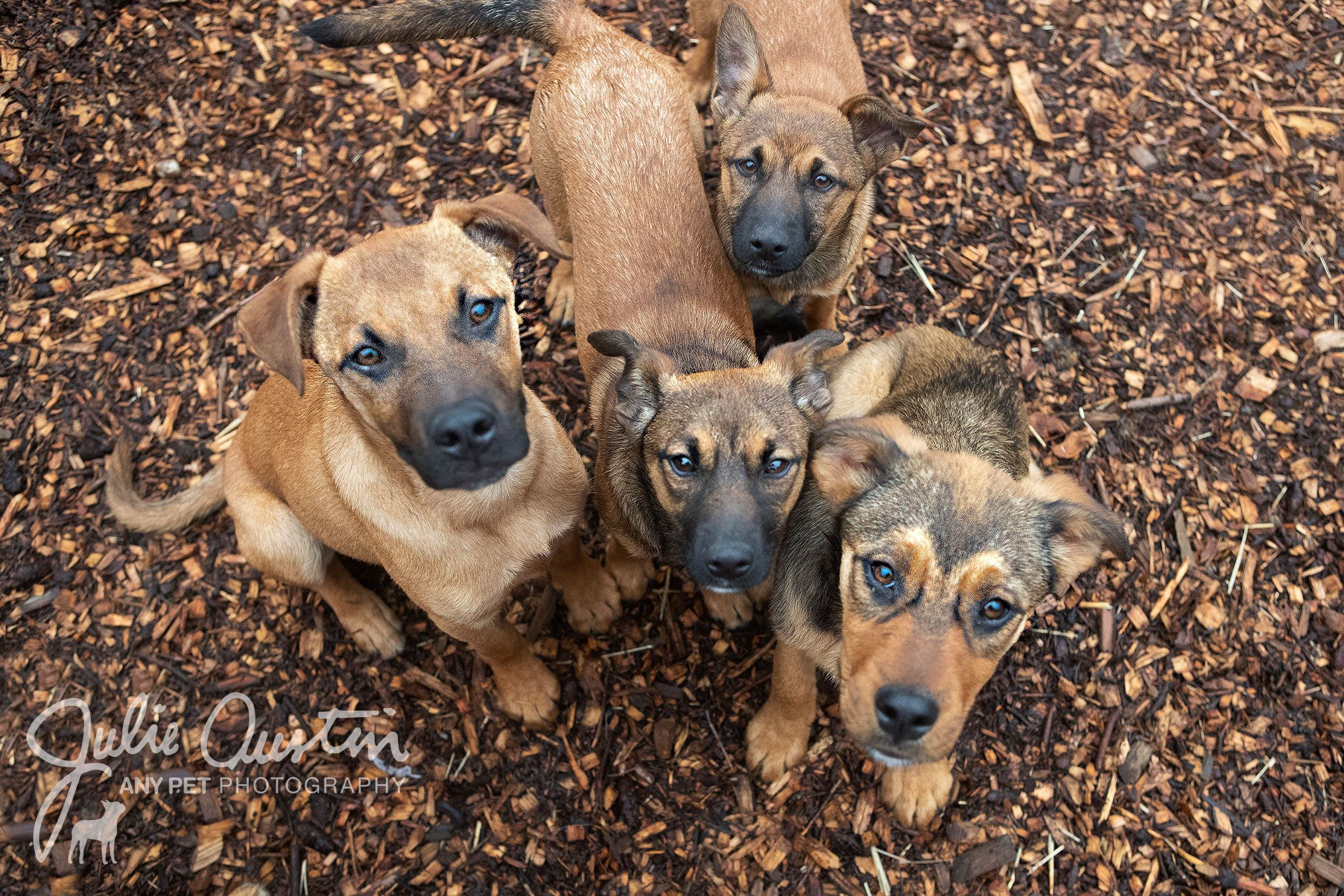 Here are four of the amazing dogs I photographed today at