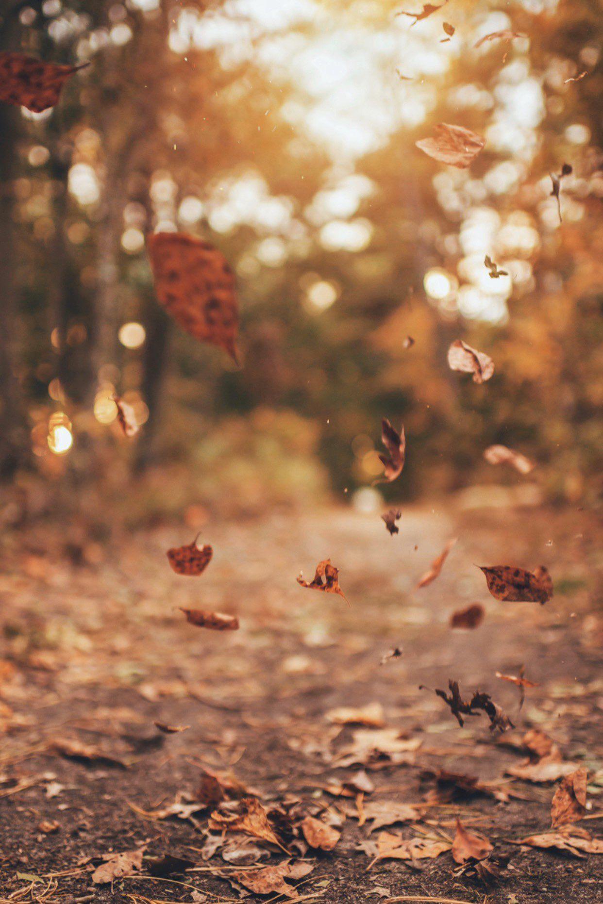 Brandon Woelfel On Twitter Autumn Leaves Wallpaper Fall Wallpaper Tumblr Photography Wallpaper